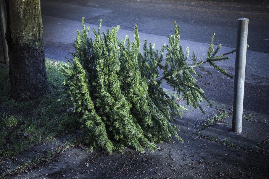 Święta, Święta – i po Świętach. A co z choinką?